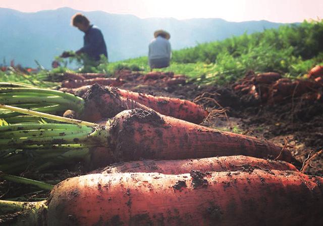 野菜と大地と暮らす日々